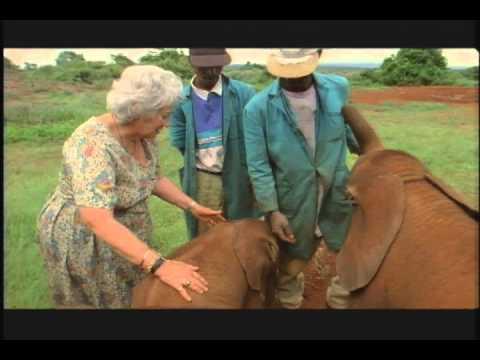 Elephant Orphans... Wisdom of the Wild