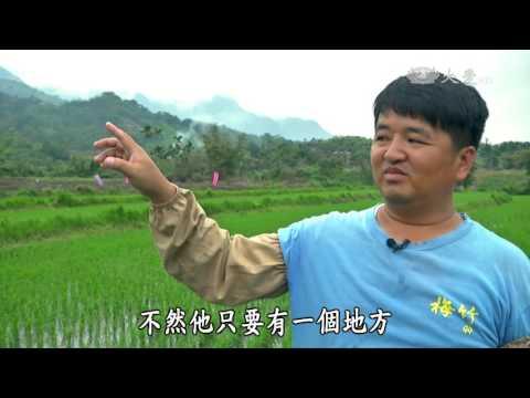 台綜-農夫與他的田-20160509 陳晟揚的海濱之米