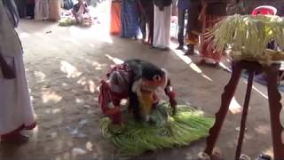 Annappa  Panjurli Nema, Kaniyara barike-Maadavu