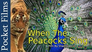 Wildlife Documentary - When The Peacocks Sing: A Prequel to the Monsoons | Pocket Films