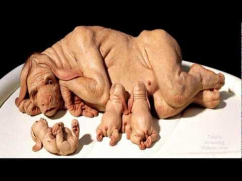 Dog And Human Mix Hybrid dog human human dog