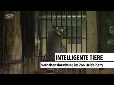 Intelligente Tiere    RON TV