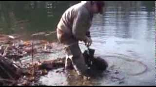 how to trap beaver with foothold trap