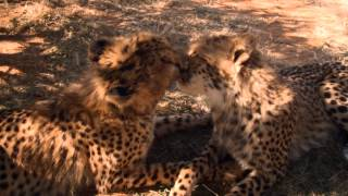 African Safari 3D Trailer | Official Version