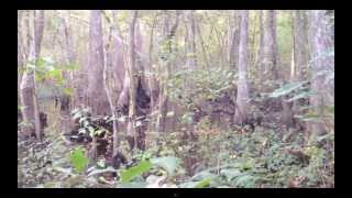 Bigfoot, Skunk-ape, Sasquache best footage ever