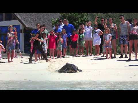 Release of Rishi - rescued Olive Ridley turtle (10 Apr 15)