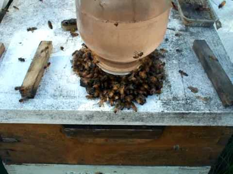 Open feeding honey bees,pro and con. Beehive top feed bottles by Beekeeper John Pluta, Milledgeville Georgia. Beekeeping fall bee feeding ideas and variation...