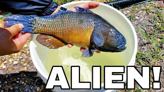 Colorful ALIEN FISH DISCOVERED Before HURRICANE! *Help Identify*