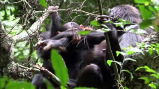 Le Paradis Africain  La Chaine Des Virunga