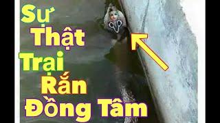 TRẠI RẮN LỚN NHẤT Ở VIỆT NAM ( The largest snake farm in Viet nam )