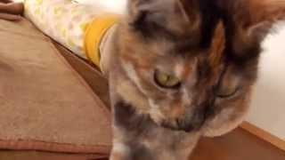 猫の目線でお送りする成猫たちの日常