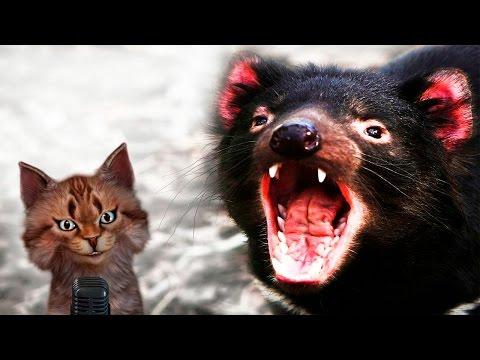 Тасманийский дьявол   Самое интересное и позновательное про животных для детей   Семен Ученый