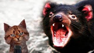 Тасманийский дьявол | Самое интересное и позновательное про животных для детей | Семен Ученый