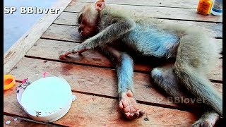 Dog Bite Beautiful Monkey Pigtail In Bad Condition Thank For Help - SP BBlover