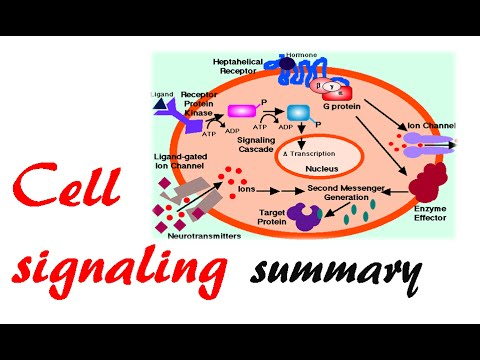 Cell signaling summary