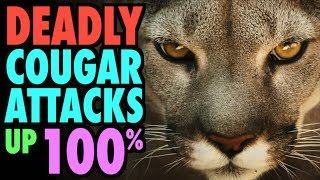 Deadly Cougar Attacks Up 100%!!!