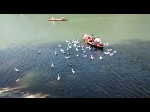Ducks in Nainital Lake - NAINITAL TOURISM: Since 1 9 9 9