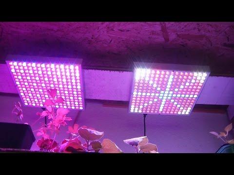 LED Growlampen im Vergleichstest Teil 1