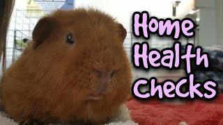 Guinea Pig Home Health Check