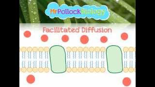 Diffusion, Facilitated Diffusion & Active Transport: Movement across the Cell Membrane