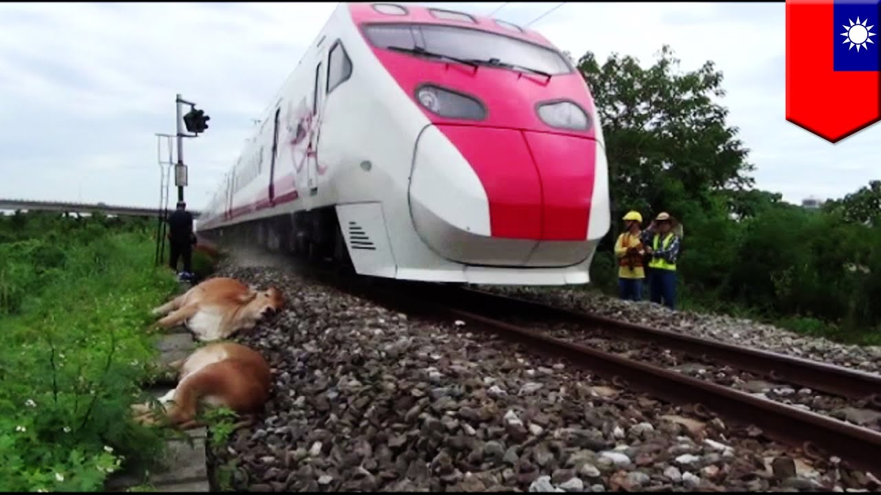 Fatal train accident: takes 6 lives without warning - YouTube