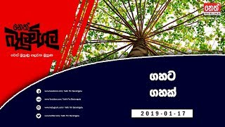 Neth Fm Balumgala | Neth Fm Forests For The Future (2019-01-17)