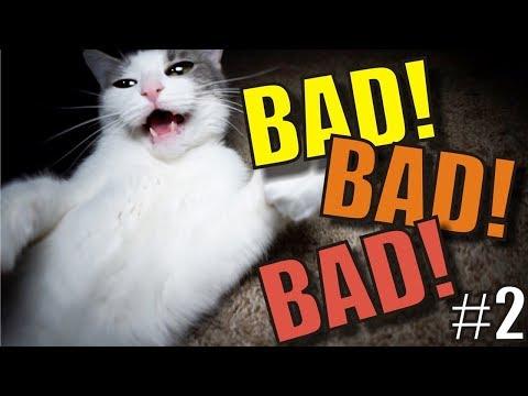 Talking Kitty Cat 66 - BAD! BAD! BAD! 2