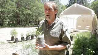 Medical marijuana grower James Bowman tours his Southern Oregon farm