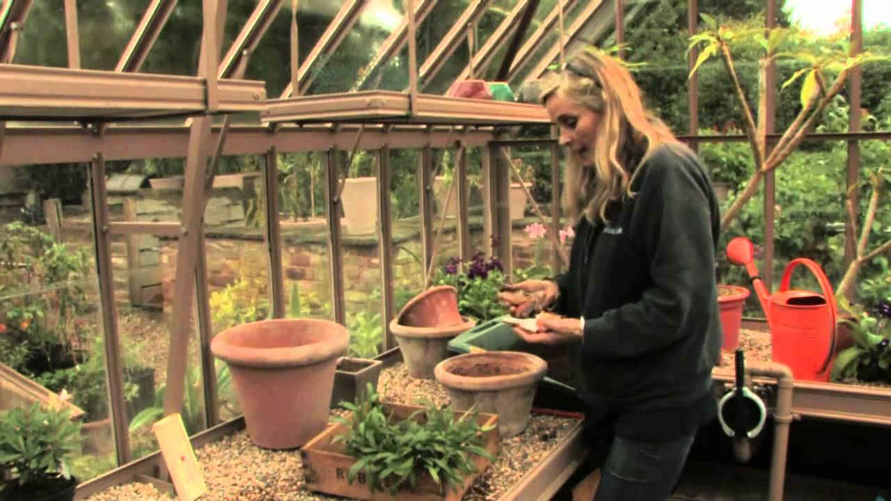 Planting Bulbs In Pots How To Plant Ahead Youtube