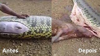 Ինչով ավարտվեց օձի ահռելի նախաճաշը