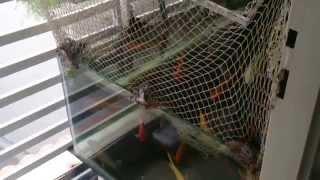 Chia sẻ kinh nghiệm làm hồ KOI Mini ngoài ban công