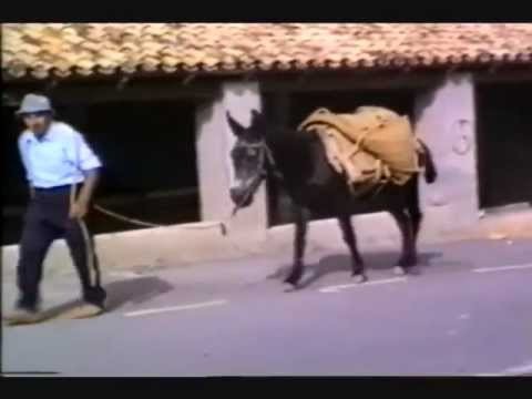 Sella - Working Donkey Video