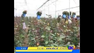 Ethiopian Business Eve News dec 10, 2015 SD quality