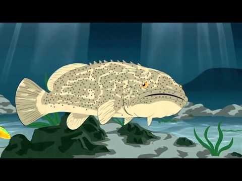 Kanye West - Gay Fish