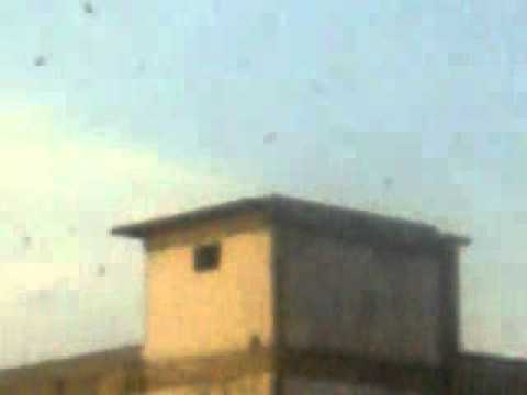 Suara Burung Walit.wmv video