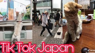 [Tik Tok Japan] Những tình huống hài hước Nhật Bản #1