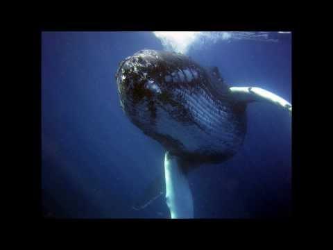 Los sonidos de los animales marinos.