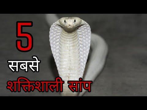 5 Worlds Most Powerfull Snakes | दुनिया के सबसे खतरनाक सांप.