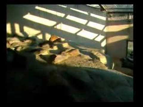 王子動物園 ライオン