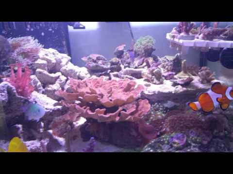 Reef tank update Day 19 of the sps mixed reef