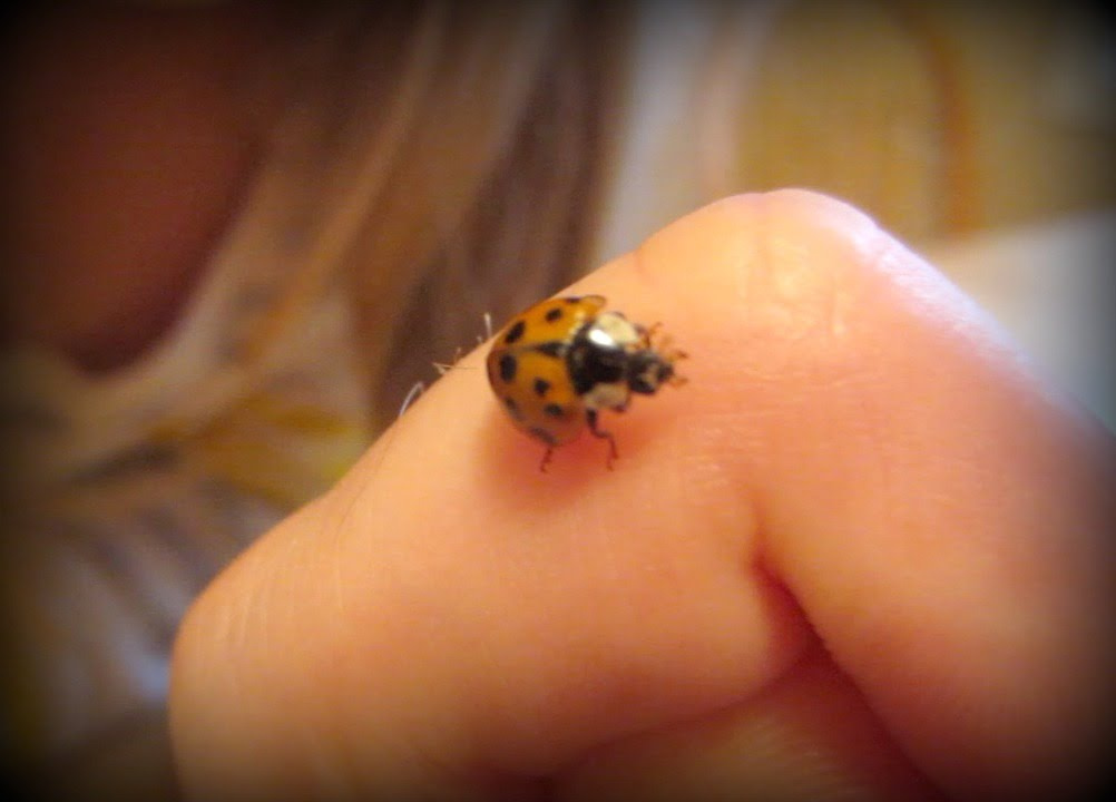 Do Lady Bugs Actually Bite Vlog 259 Youtube