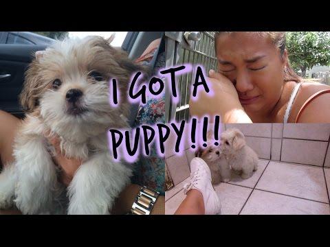 I GOT A PUPPY!!! + PUPPY SHOPPING!!!