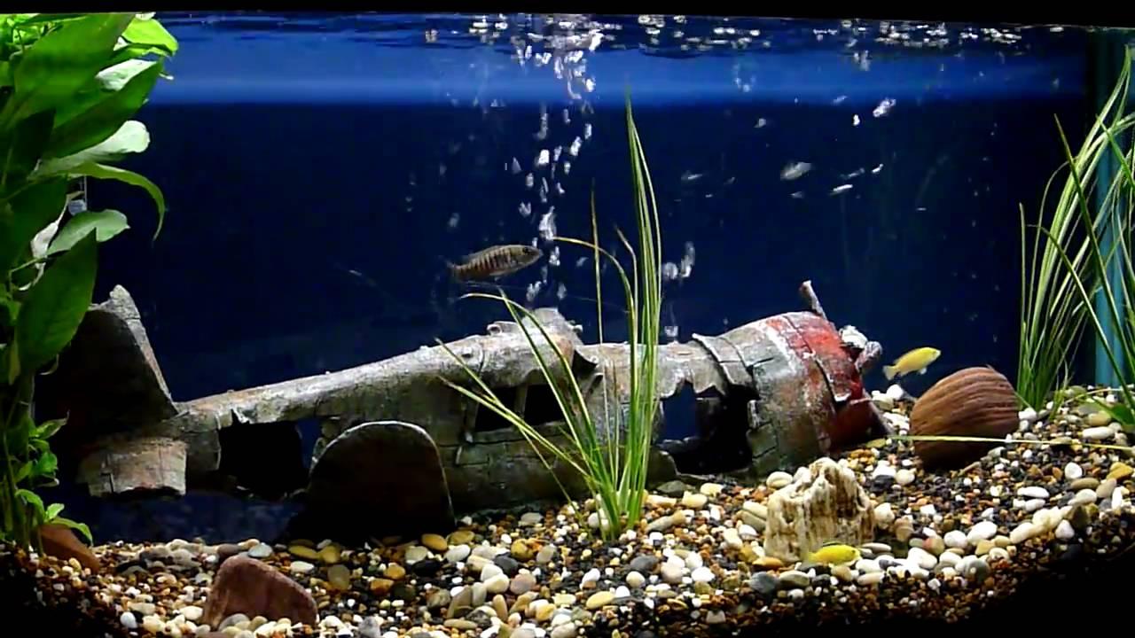 Fish Swimming Through Plane Wreck - YouTube