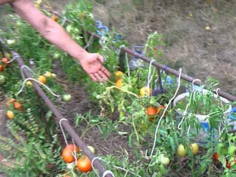 Опора для томатов своими руками