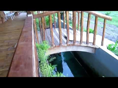 amazing friendship between monkey and dog