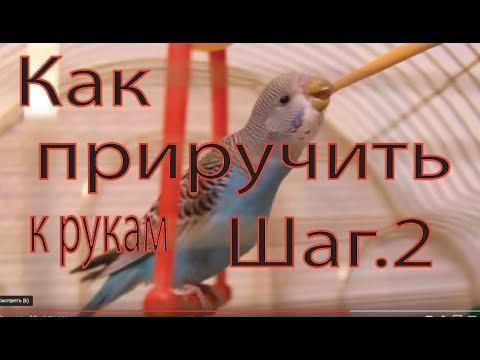 Разговорный Жанр Для Попугая - Компьютерная Программа Для Обучения Попугая Разговору
