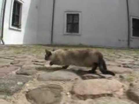 В литовском монастыре живут коты и змеи