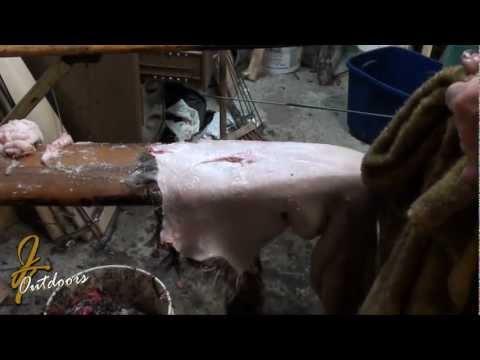 Trapper Paul Raccoon Skinning and Fleshing