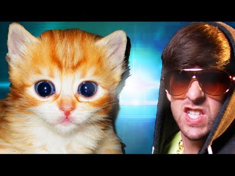 CUTE FURRY KITTENS (Official Music Video)