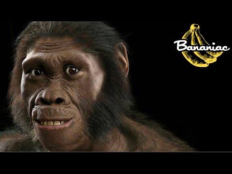 Were Human Ancestors Killer Ape Hunters?